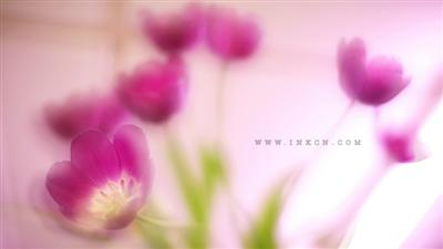 《春梦了无痕》